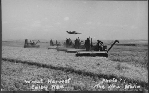 Wheat harvest, Colby, Kansas - Page