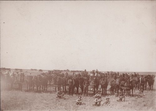 Team of horses, Thomas County, Kansas - Page