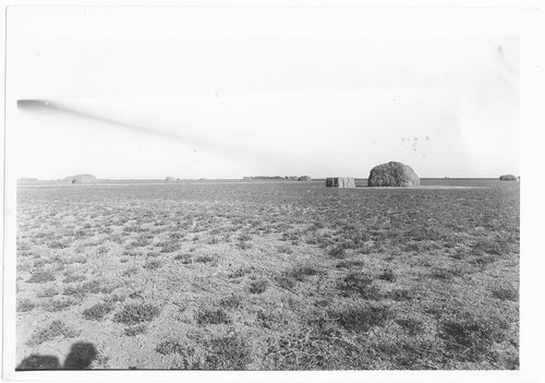 Alfalfa field, near Garden City, Finney County, Kansas - Page