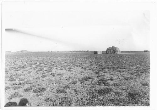 Alfalfa field, near Garden City, Finney County, Kansas - Page