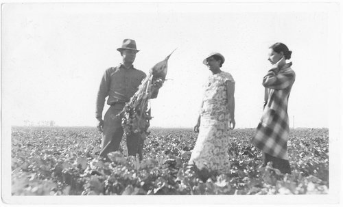 Sugar beet field, Finney County, Kansas - Page