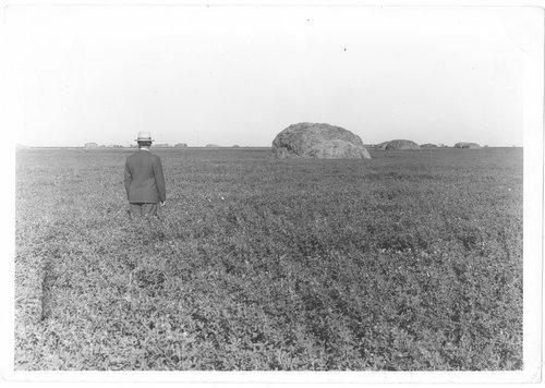 Alfalfa field in Finney County, Kansas - Page
