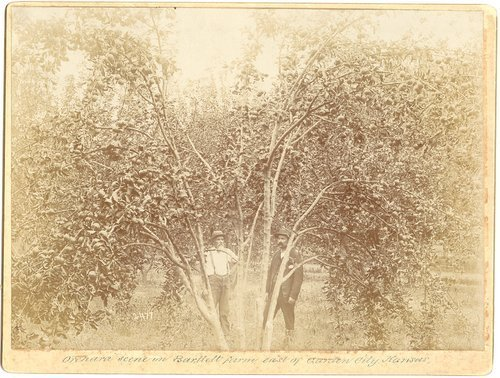 Orchard on the Bartlett farm east of Garden City, Kansas - Page