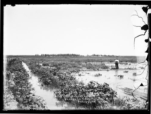 Irrigating on J. C. Mitchell's farm, Finney County, Kansas - Page
