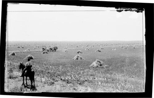 A field of wheat, Kearney [Kearny] County, Kansas - Page
