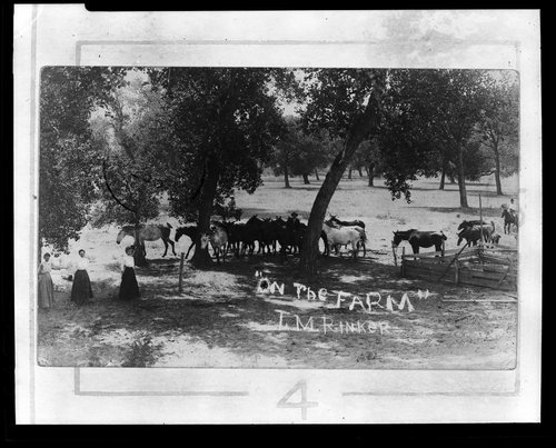 On the farm, Clark County, Kansas - Page