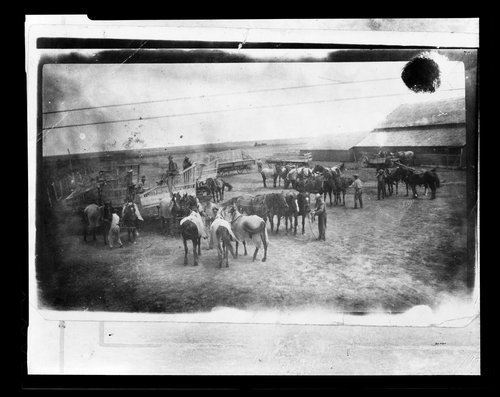 Teams of horses, Comanche County, Kansas - Page