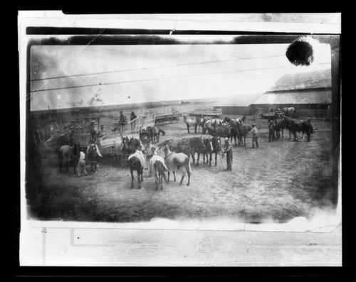 Teams of horses, Comanche County, Kansas - Page