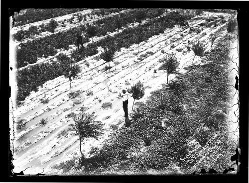 Irrigating at M. F. Griggs place, Garden City, Finney County, Kansas - Page