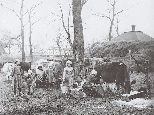 Milking cows on a farm in Riley County, Kansas - Page