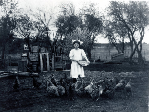 Girl feeding chickens - Page