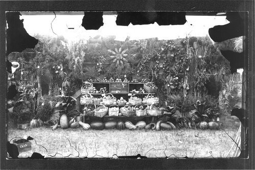 Vegetable display, fair, Finney County, Kansas - Page