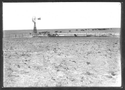 Animals watering, Finney County, Kansas - Page