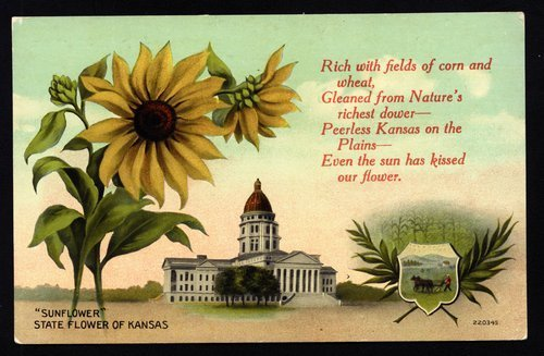 State capitol and sunflower - Page
