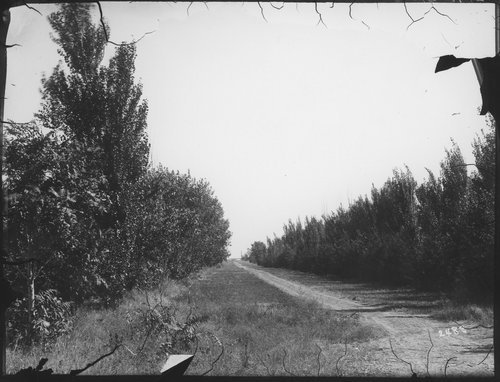 Drive on the Richter farm, Finney County, Kansas - Page