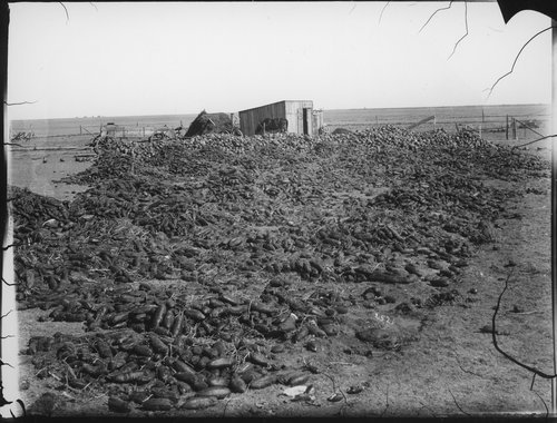 Cucumbers, Finney County, Kansas - Page