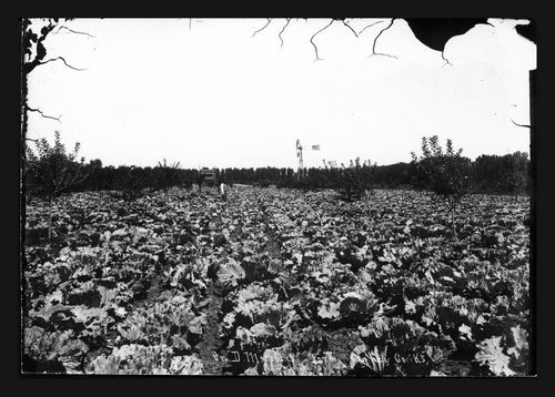 D.M. Frost's farm, possible cabbage field, Finney County, Kansas - Page