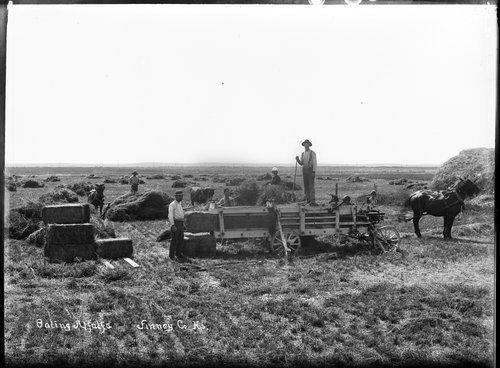 Baling alfalfa, Finney County, Kansas - Page