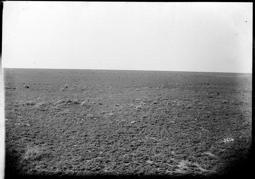 Raw prairie, Finney County, Kansas - Page
