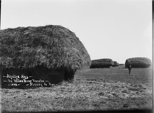 Alfalfa hay on Miles Bros' Ranch, Finney County, Kansas - Page
