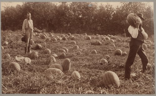 Watermelon patch, Washington County, Kansas - Page