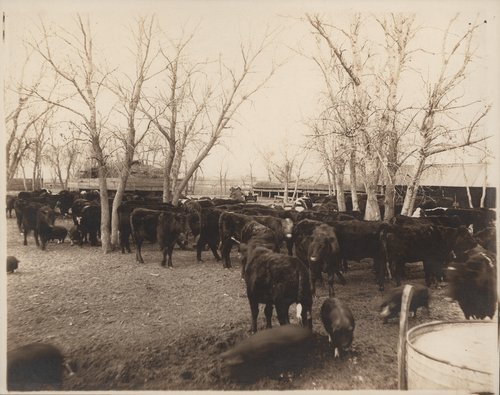 J. P. Emery's feed lot, Gray County, Kansas - Page