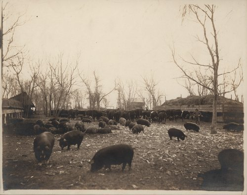 J. P. Emery's feedlot, Gray County, Kansas - Page
