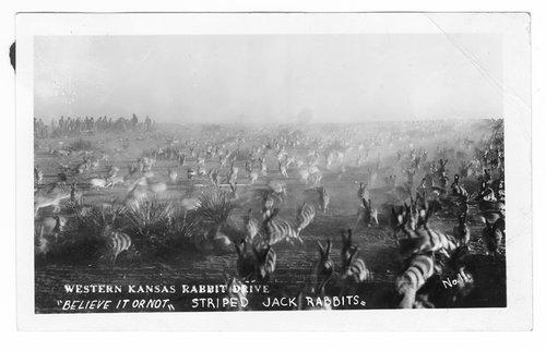 Western Kansas rabbit drive - Page
