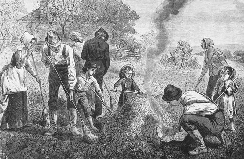 Clearing a field of grasshoppers - Page