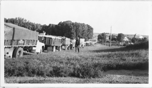 Hauling wheat in Sheridan County, Kansas - Page