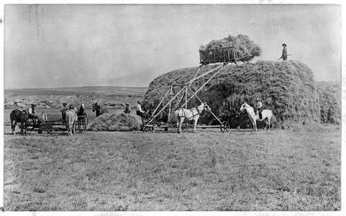 Harvesting hay in Sheridan County, Kansas - Page