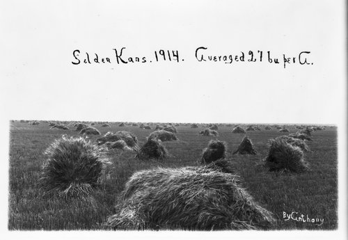 Harvested wheat in Sheridan County, Kansas - Page