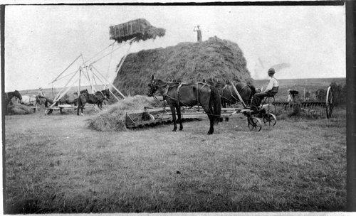 Harvesting hay in Sheridan County, Kansas - Page