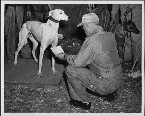 Greyhound coursing, Abilene, Kansas - Page