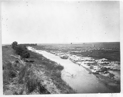 A. H. Baker's sheep ranch, Comanche County, Kansas - Page