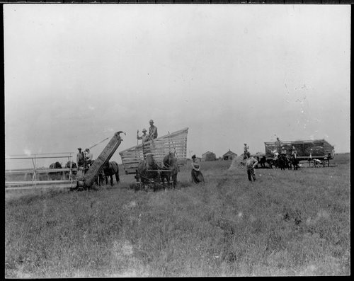 Wheat harvest in Pawnee County - Page