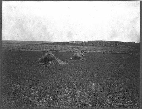 Wheat shocks in Kansas - Page