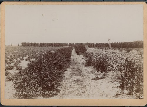 D.M. Frost's farm near Garden City, Finney County, Kansas - Page