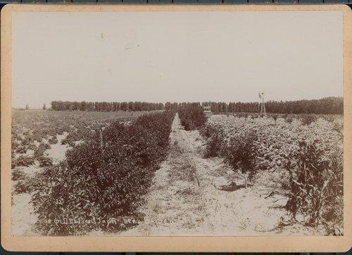 D.M. Frost's farm near Garden City, Finney County, Kansas - Page