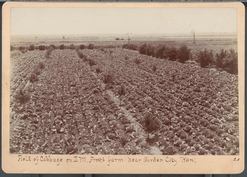 D.M. Frost's cabbage field, near Garden City, Finney County, Kansas - Page