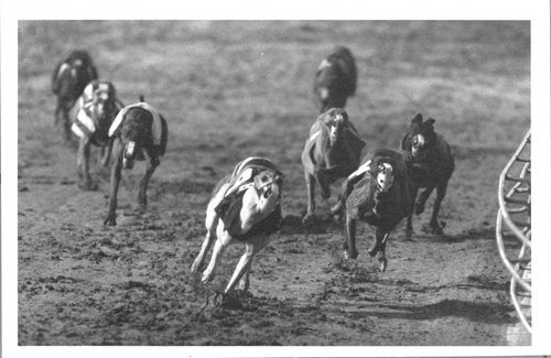 Greyhound racing, Kansas City, Kansas - Page