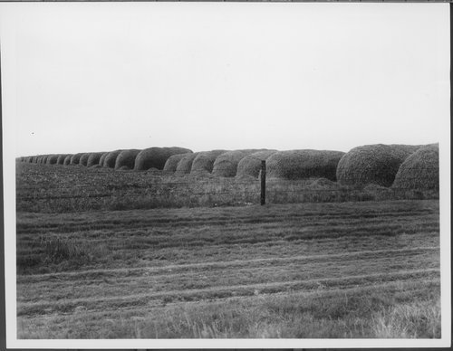 Wheat Stacks, Greeley County, Kansas - Page