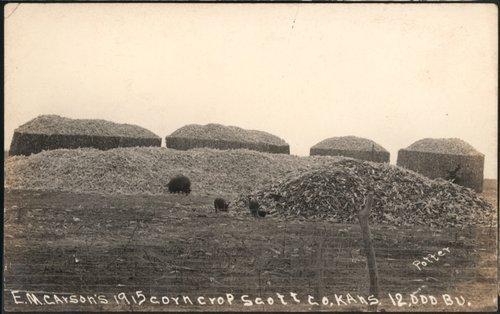 E. M. Carson's corn crop in Scott County, Kansas - Page