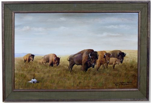 Bison, Central Plains - Page