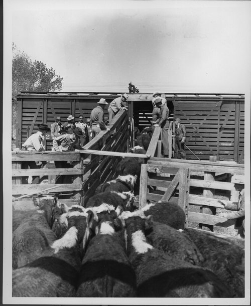 Atchison, Topeka & Santa Fe Railway Company stock car - Page