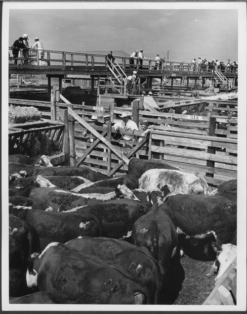 Union Stockyards, Los Angeles, California - Page