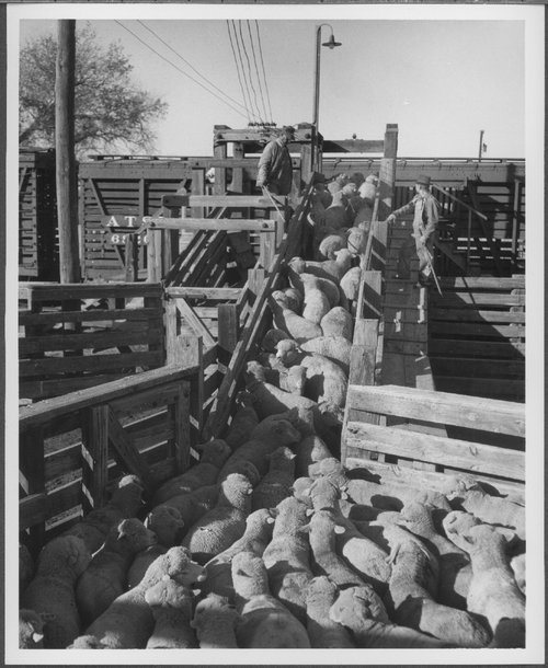 Atchison, Topeka & Santa Fe Railway Company stock car, Roswell, New Mexico - Page