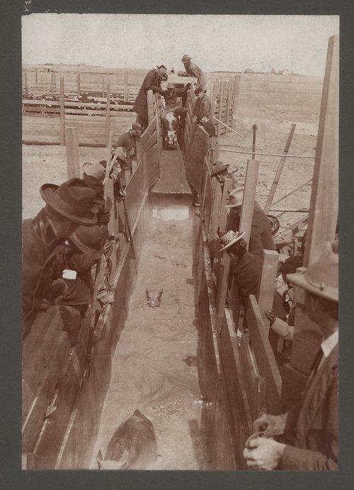 Cattle Dipping Association, Garden City, Kansas - Page