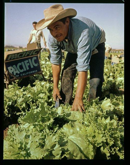"Mexican ""Bracero"", Blythe, California - Page"