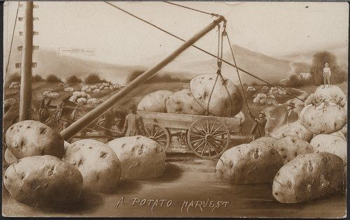 A potato harvest - Page